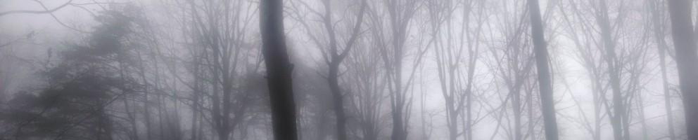 cropped-2014-01-15-09.16.16.jpg